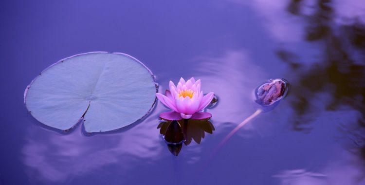 Meditation and Creativity